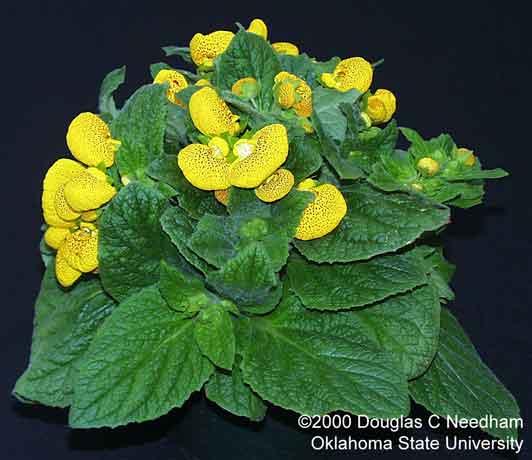 Гороскоп растений по знакам зодиака какие подходят